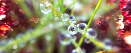 spring_2012-3